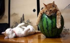 Картинки по запросу просмотр видео о кошках полезен для вас.