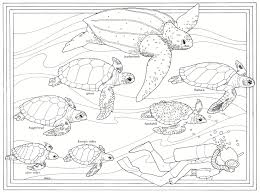 Adult Sea Turtles Coloring Pages Sea Turtles Coloring Pages
