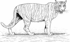 Small Picture Standing Tiger Coloring Pages Bengal Tiger Coloring Page Free
