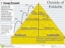 food web pyramid energy pyramid food web running brushy 7th grade science