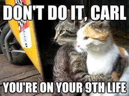 15 Best Cat Memes Ever - 15 best cat memes ever related to Meme ... via Relatably.com