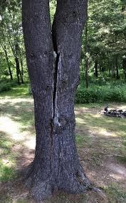 New Leaf Tree Services Inc Certified Arborist Columbia