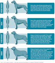 Is Your Dog Overweight Easy Reference Body Chart Dog