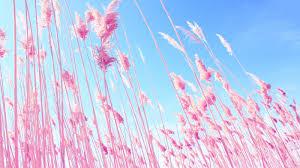 pink desktop backgrounds wallpaper gallery