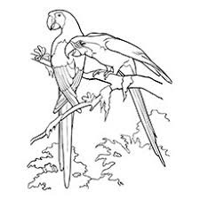 Small Picture 25 Cute Parrot Coloring Pages Your Toddler Will Love To Color