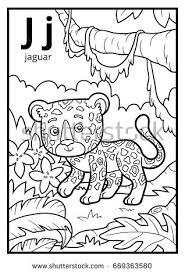 coloring book for children colorless alphabet letter j jaguar
