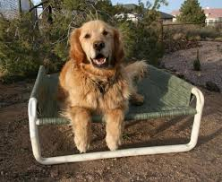 elevated outdoor large dog bed