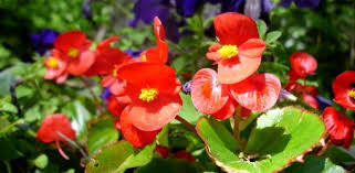 flower gardening for beginners. gardening tip flower for beginners