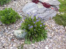 self sowing plants in the rock garden
