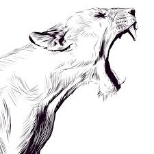 Sketches Animal Simple Animal Sketches Crazywidow Info