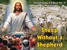 Image result for Trust the Shepherd Mark 6:30-34