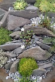 forest rock garden images