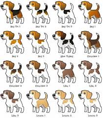 Beagle Puppy Feeding Chart Beagle Coloring Variations My Sisters Beagle Peanut Was