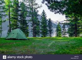 camping in the woods.  Woods A Green Tent In The Woods Background A Beautiful Lake Camping And  Under Pine Forest Intended In The Woods D