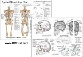 Kinesiology Muscle Chart Applied Kinesiology Chart