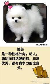 小型 犬 寿命