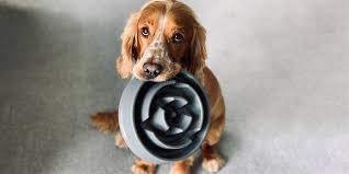 The <b>best</b> dog <b>food</b>, according to experts and veterinarians