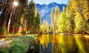 Summer Pine Forest Hd - 1280x768 ...