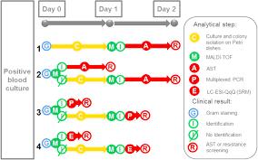 Petri Dish Bacteria Identification Chart Rapid Bacterial Identification Resistance Virulence And