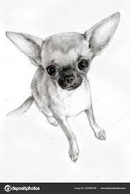 Fotografie Cane Chiwawa Disegno Disegno Carta Cane Animale Piccola
