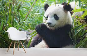 Panda Bear Room Wall Murals