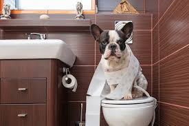 Image result for potty training for dogs