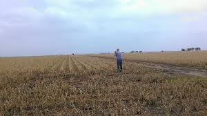 Soybean Hail Damage Chart Assessing Hail Damage Jenreesourcess Extension Blog