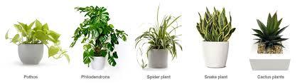 great office plants.  plants best office plants for reducing pollutants with great office plants