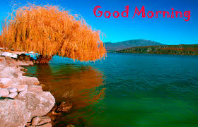 Latest Good Morning Images Wallpaper Photo Pics HD Download For ...