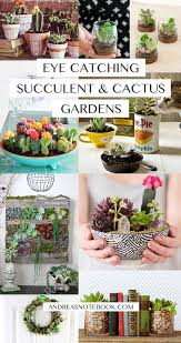 Small Picture Best 20 Indoor cactus garden ideas on Pinterest Indoor cactus