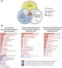 Venn Diagram Of Transcription And Translation Functional Annotation Of The Erythroid Transcriptomes A