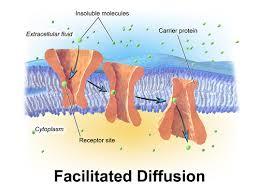 Venn Diagram Of Diffusion Osmosis And Active Transport Differences Between Osmosis And Facilitated Diffusion
