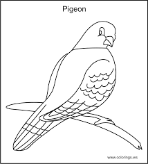 Small Picture Pigeon Coloring Pages Pigeon Color Pagesjpg Coloring Pages clarknews