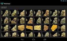 weedmaps marijuana cannabis weed reviews  android apps on google play