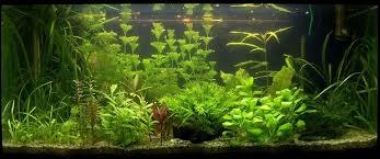 best glass aquariums in 2021 reviews