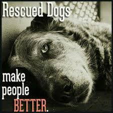 Rescue Dog Quotes Simple Dog Town Canine Rescue