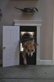 through wall dog door inspirational 100 best diy pet playgrounds images on