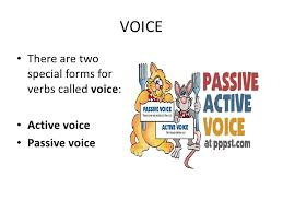 Active Voice Resume Examples 3 Examples Of Summary On Resume