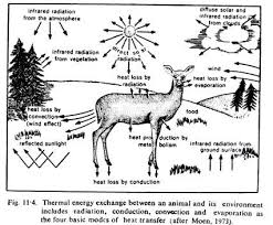 the role of temperature as an ecology factor essay clip image002