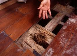 do you know how much damage termites can do to a home the effects of a termite infestation can be devastating to a family
