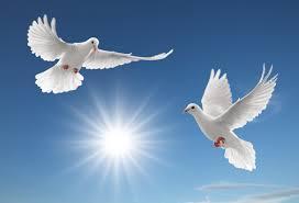 к чему снятся голуби во сне женщине сонник голуби птицы птицы