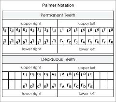 Fdi Notation Charting Dental Charting Dental Index Jr Online Dental Tutor