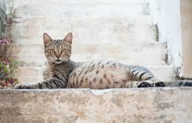 """Résultat de recherche d'images pour """"gestation chats"""""""