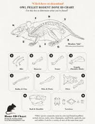 Owl Pellet Skeleton Reconstruction Chart Owl Pellets