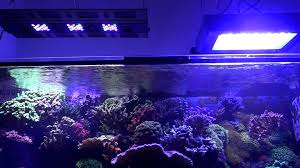 pit s reef tank light update maxspect razor chinese 120w led fixtures you