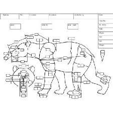 Measurement Charts Bear Deer Research Mannikins Taxidermy