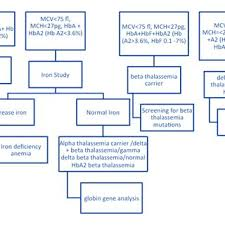 Flow Chart For Carrier Identification Of Beta Thalassemia