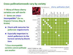 Fruit Tree Pollination Chart Tree Fruit And Berry Pollination In Virginia And The Mid