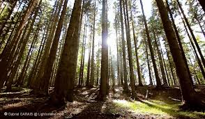 Relaxing Video Soothing Relaxing Forest 2 Hours Hd Video The Lightorialist