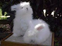 100+ Bunny Rabbit ideas | bunny, rabbit, <b>cute bunny</b>